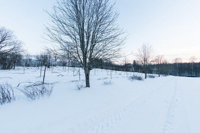 Wine Hill in Vārnava