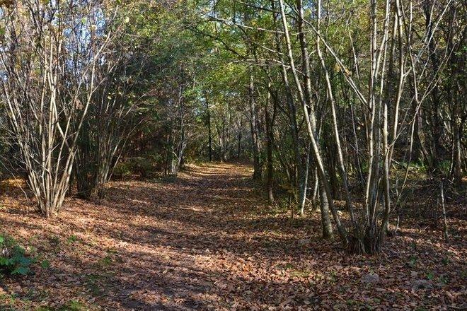 The Cognitive Path of Šventoji Nature