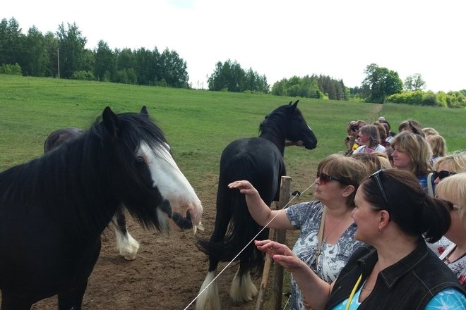 "Viewing of horses in ""Plavnieki"" in Selpils civil parish"