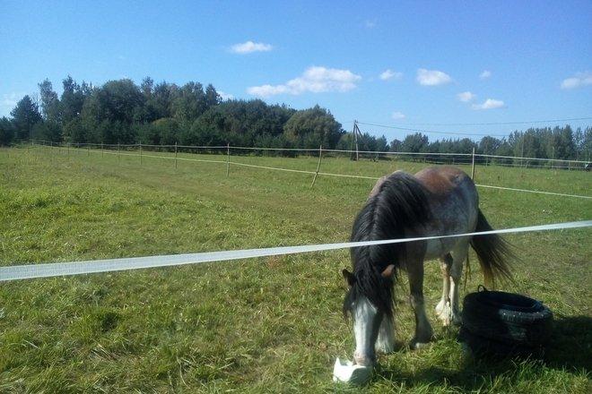 """Viewing of horses in """"Plavnieki"""" in Selpils civil parish"""